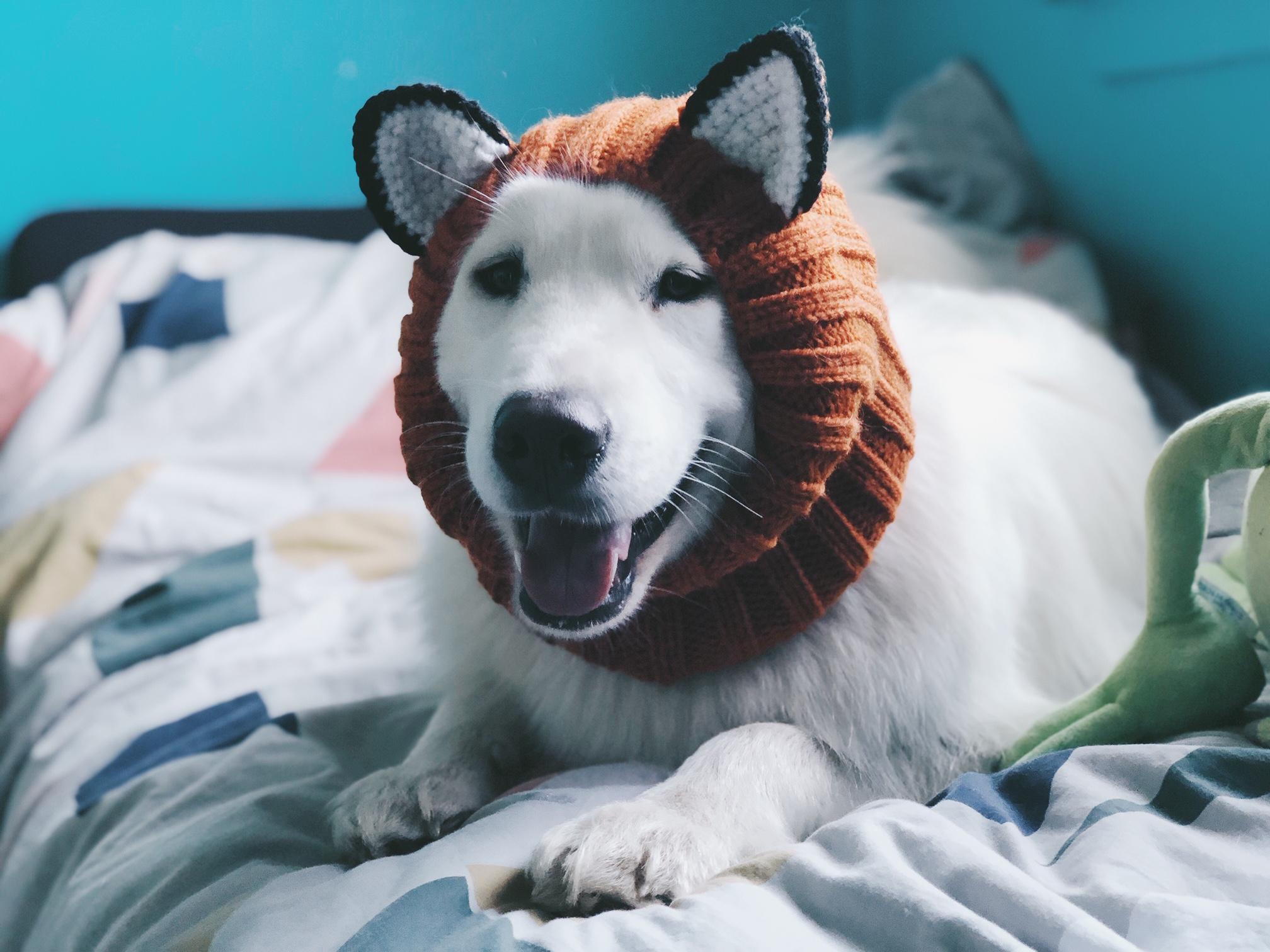 Ich habe meinen Hund eingekleidet -