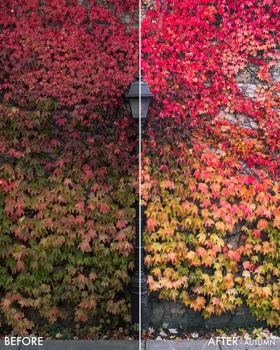 wonguy_b&a_autumn.jpg