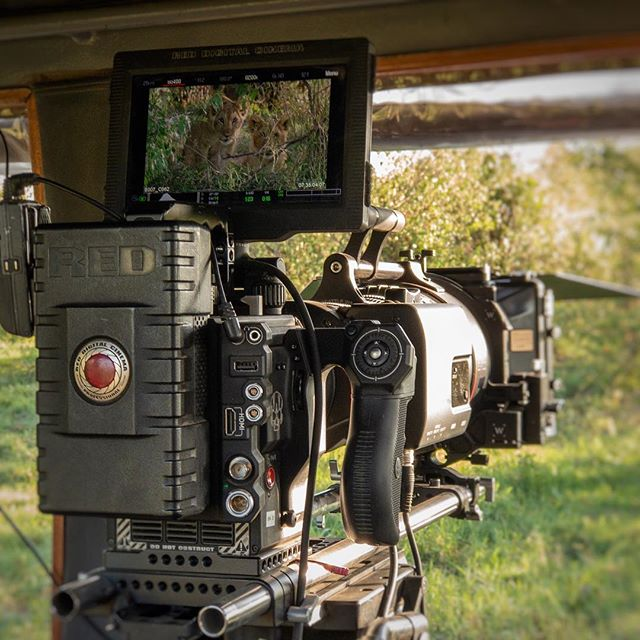 Great to be back in the Mara once again filming with the big cats for the next month #masaimara #kenya #wildlife #lions #documentary #cinematography @reddigitalcinema @redcamerausers #redepicw