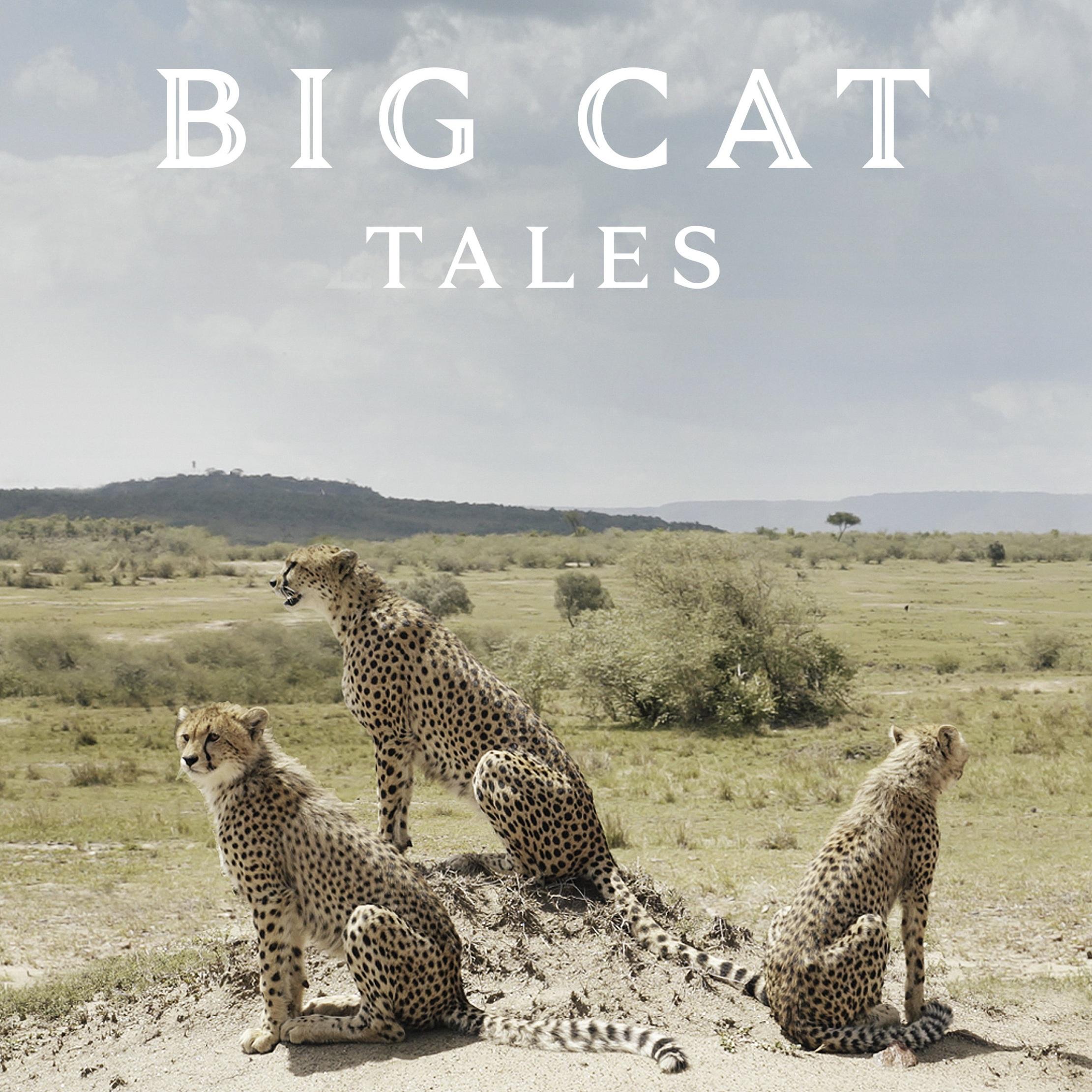 BigCatTales.jpg
