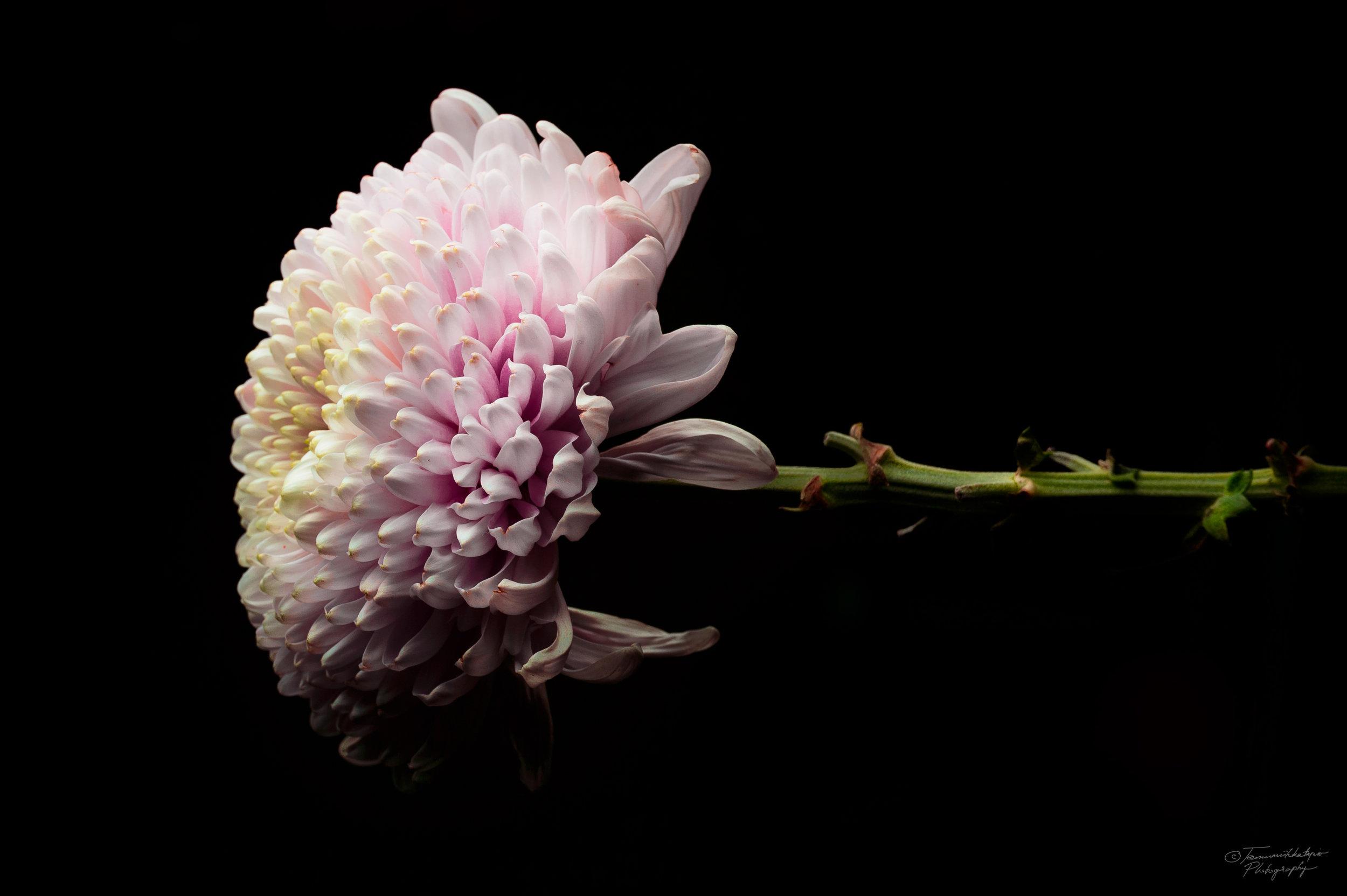 alone flower in a light.jpg