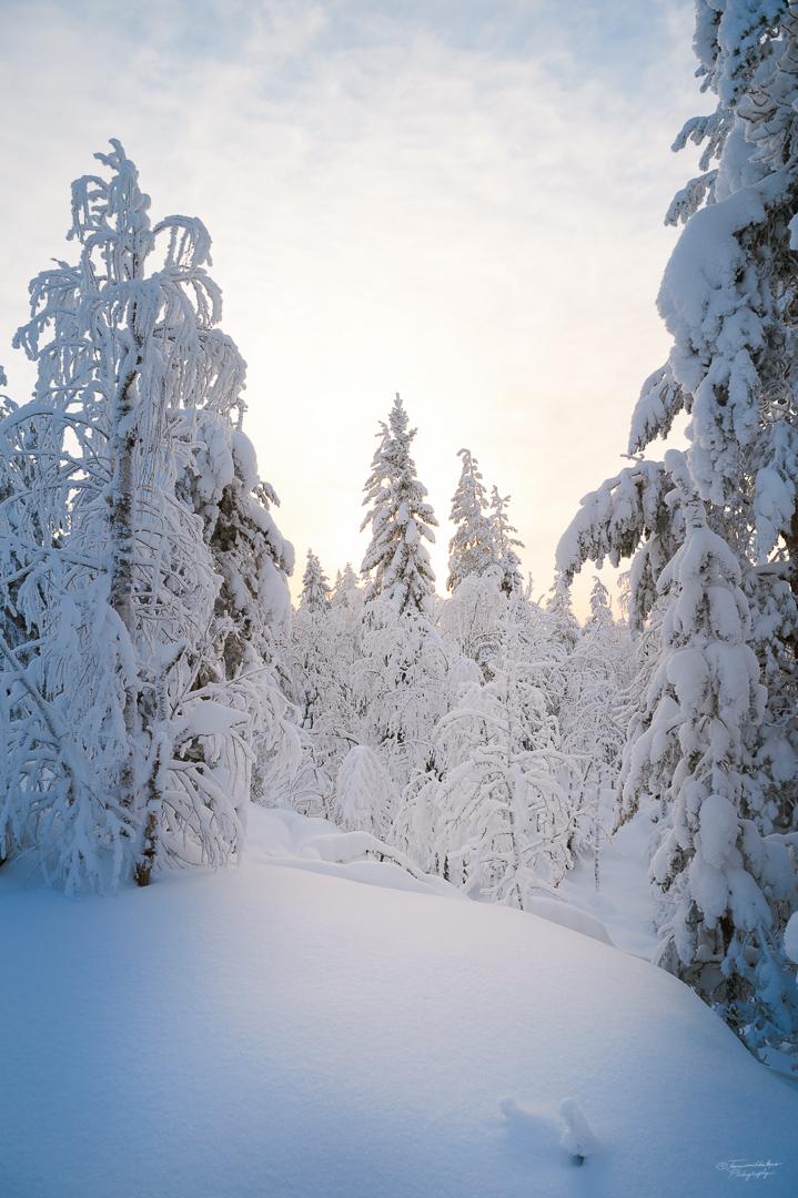 Southern Konnevesi National Park-23.jpg