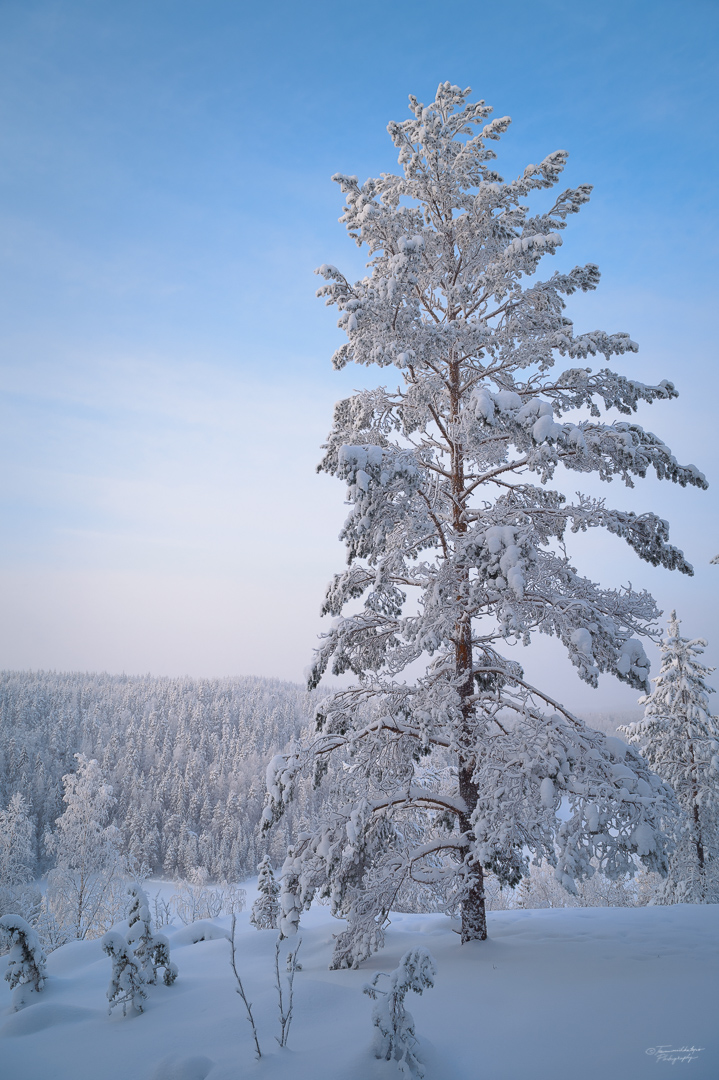 Southern Konnevesi National Park-25.jpg