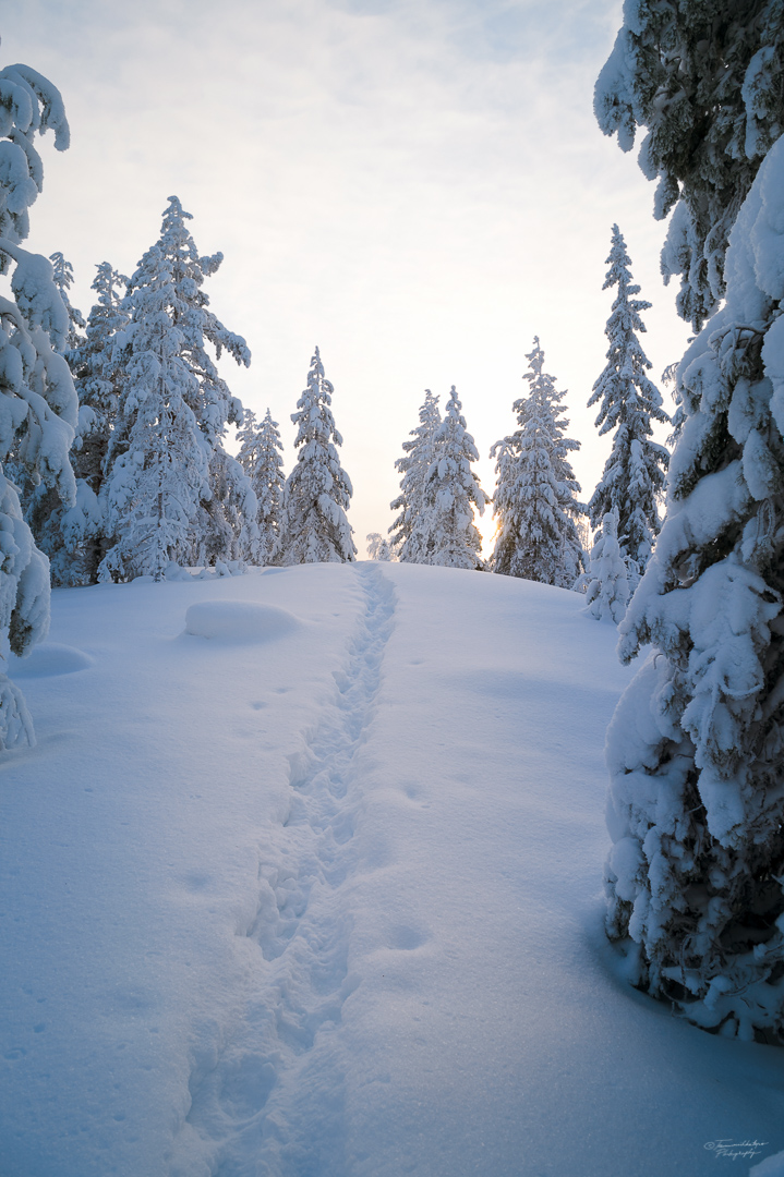 Southern Konnevesi National Park-24.jpg