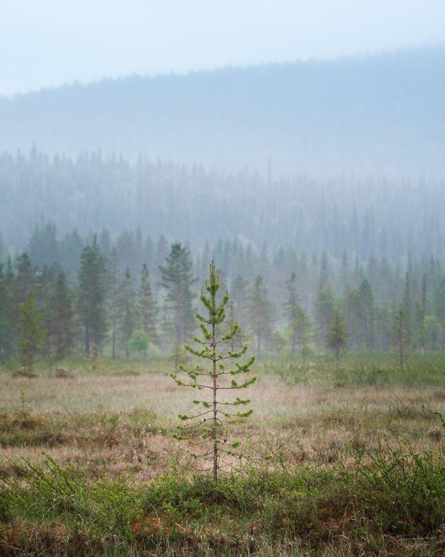 A foggy day in Pallas-Ylläs Nationalpark. #pallas #yllas #luontoonfi #pallasyllasnationalpark #finnishparks #ulkonaperillä #365klubi #discoverfinland #suomenlatu #ulkoilu #retkipaikka #outdoorfinland #VisitFinland #hiking #nationalparks #visitfinland #elämääulkona #ig_finland #outdoors #visitlapland #explorefinland #letsgosomewhere #suomenluonnonvalokuvaajat #beautyofsuomi #finland_frames #thisisfinland #nikon #nikonfinland #exploretocreate