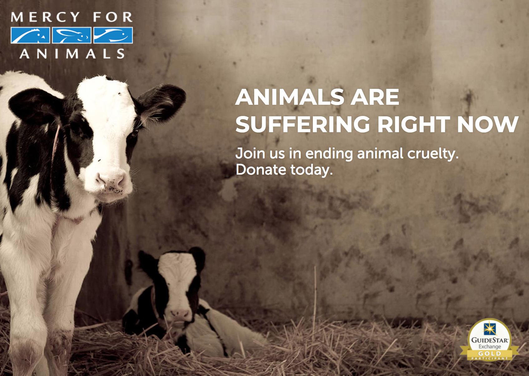 Mercy For Animals - Mercy For Animals believes that a humane society is possible. We are committed to reducing the greatest amount of suffering for the largest number of animals. Our efforts focus on protecting farmed animals—the most abused and exploited animals on the planet—and utilize a broad range of strategic approaches that seek to expose cruelty, prosecute abusers, and inspire consumers to make compassionate food choices.