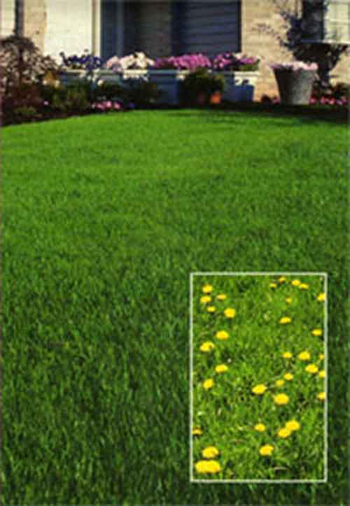 weed-control-services-near-easton-maryland.jpg