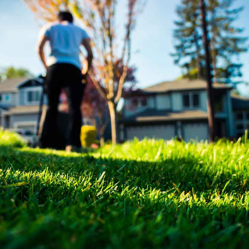 The-Benefits-of-Lawn-Treatment.jpg