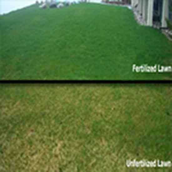 Lawn-Fertilizer-and-Weed-Control-Nitrogen-Fertilizer.jpg