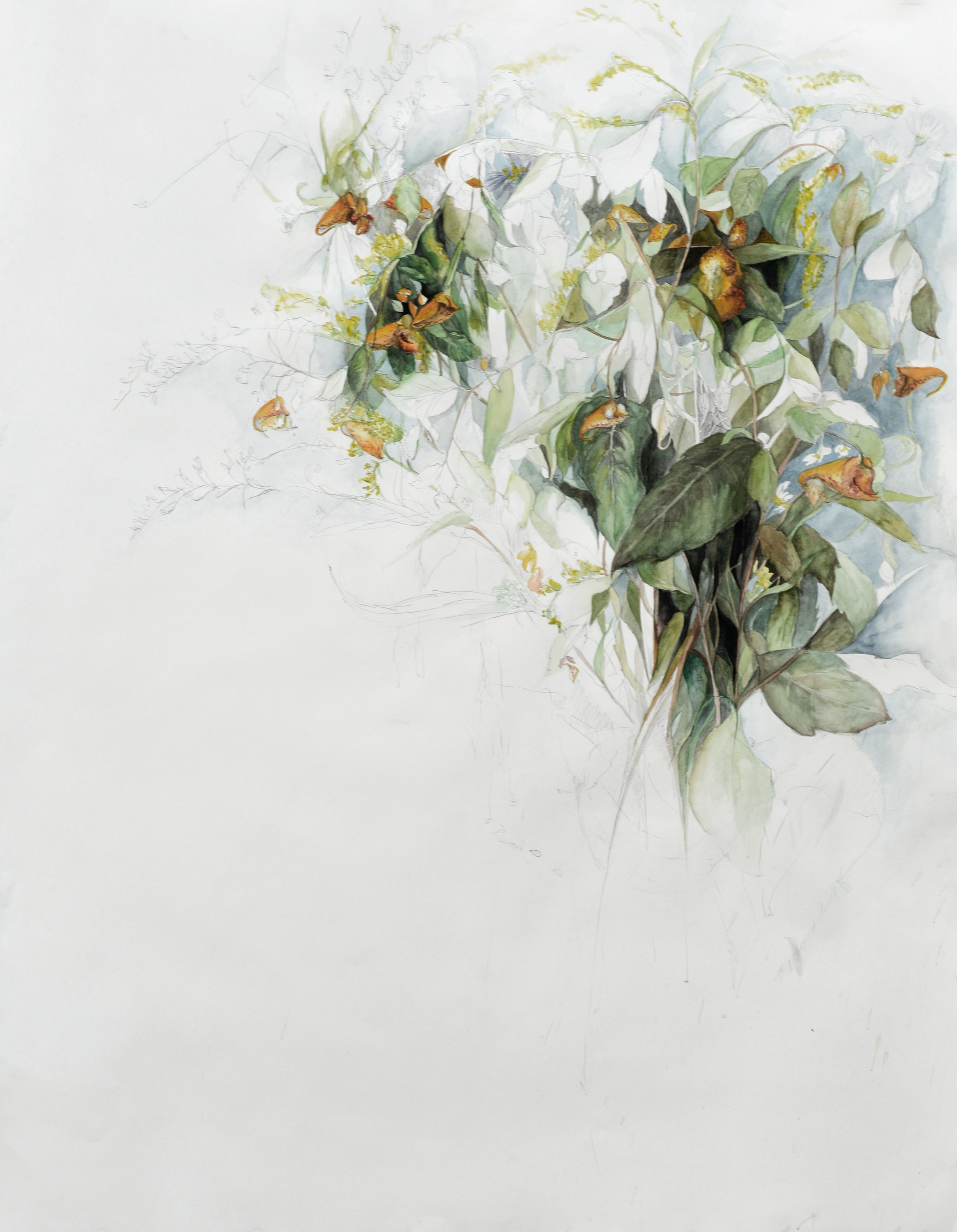 """Flowers No. 5 , Watercolor and pencil on paper, 38"""" x 50"""" (2016)"""