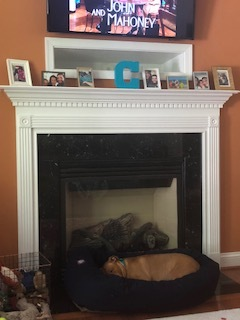 This fireplace and this mantle where our pictures and stockings live. This bagel bed where Zig naps. -