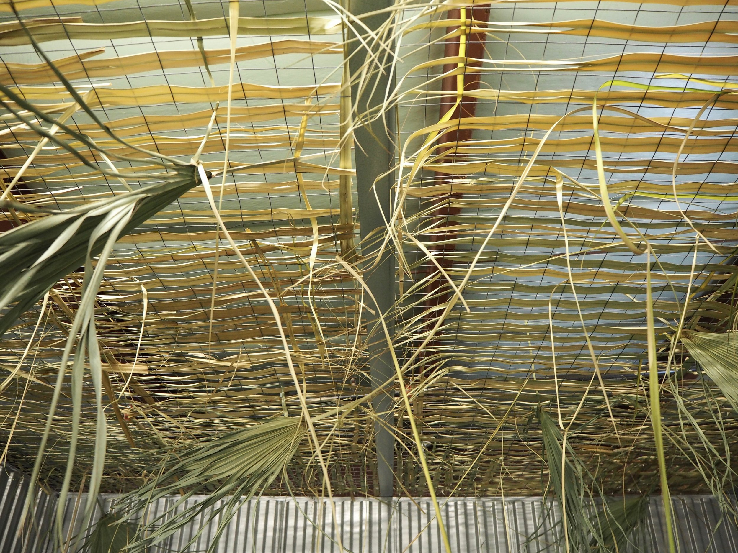 Jzeng_Oasis installation view.jpg