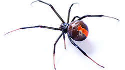 Spider removal will prevent a spider or two from becoming a huge spider problem!
