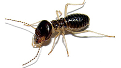 We'll help you keep termites under control and away from your home.