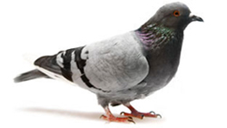Bird control will keep your business free from the noise and messes that birds tend to leave behind.