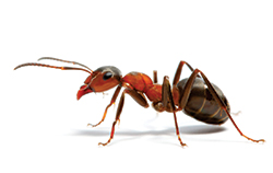 To keep ants away from your business or body corporate building you'll need help from the professionals.