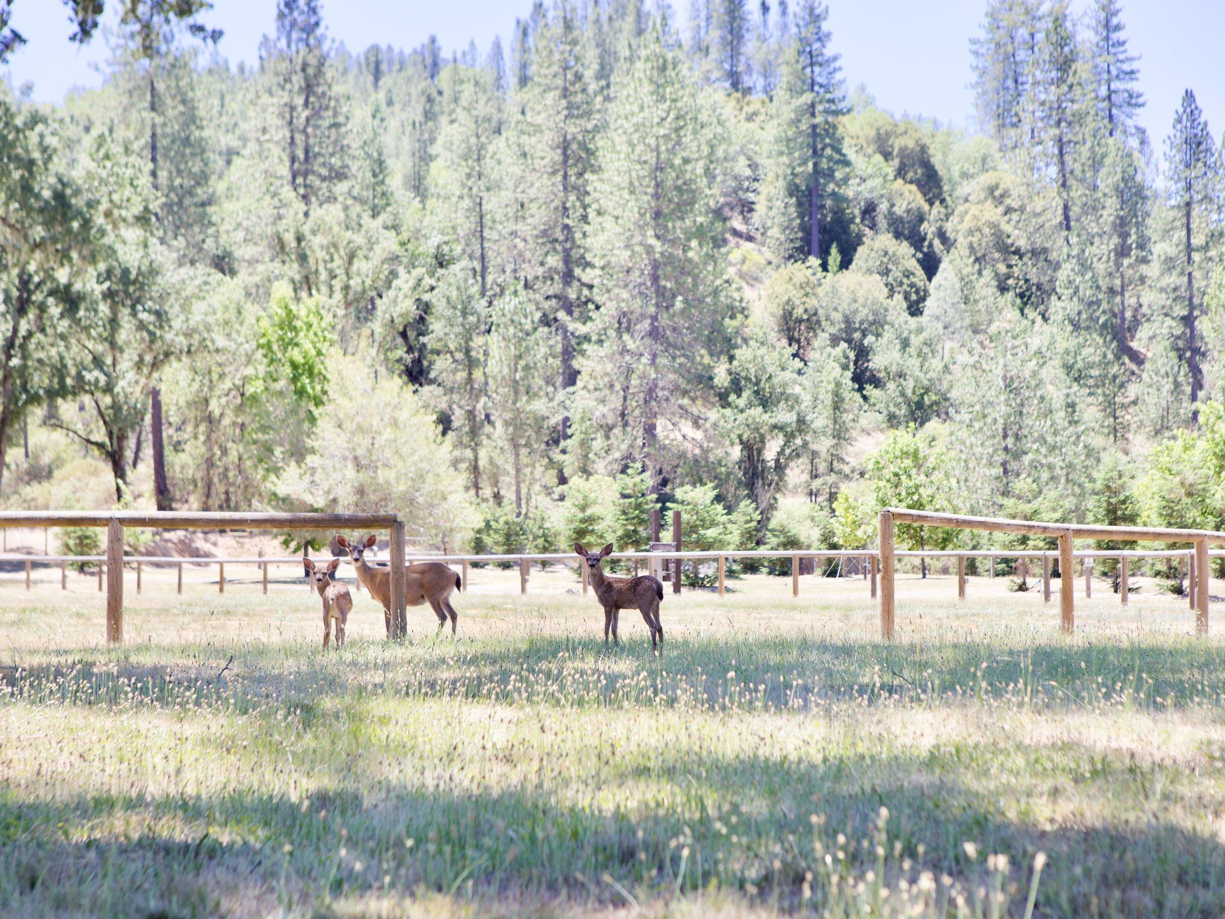 Mandala Springs Grounds And Wildlife