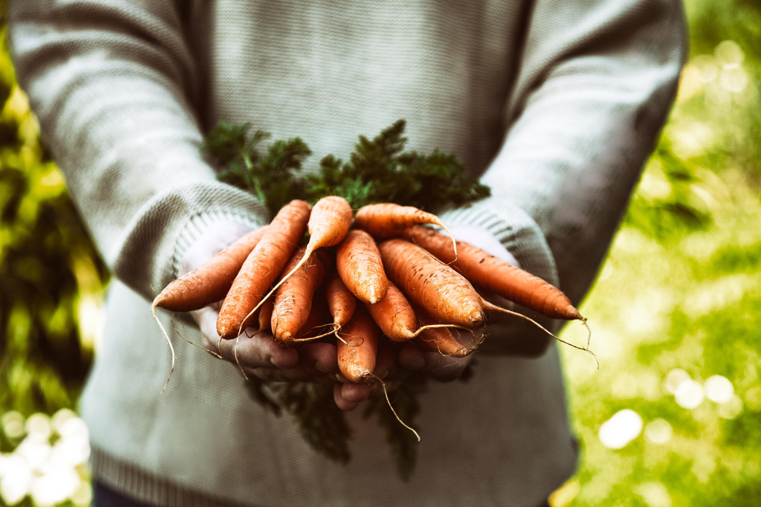 carrots-PY8AH4R.jpg