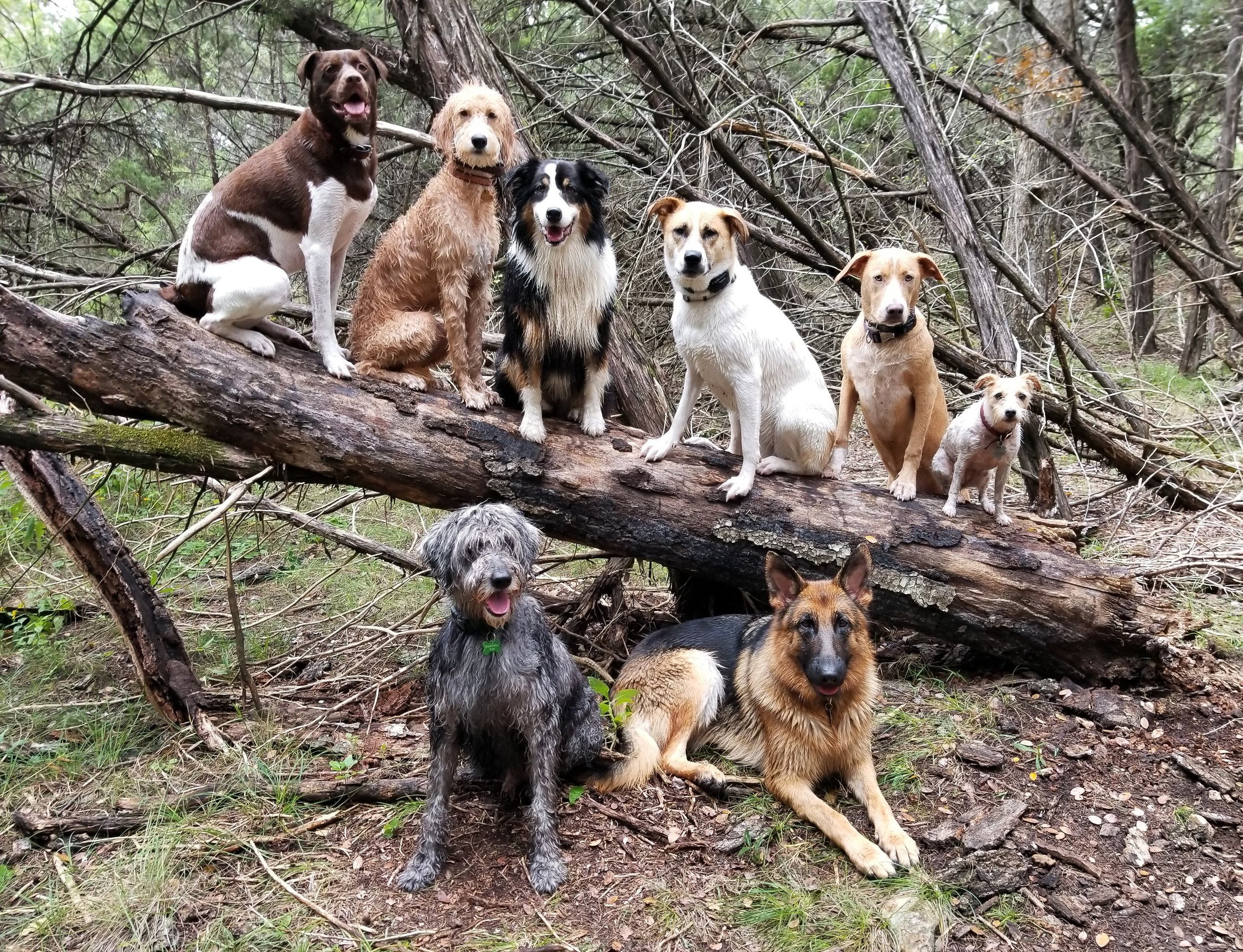 When we ask the dogs to pose for pictures, we use many commands including come, sit, up, wait, down, this way, stay, off and leave it. This photos not only look great, but are a great excuse to practice obedience, patience and focus.