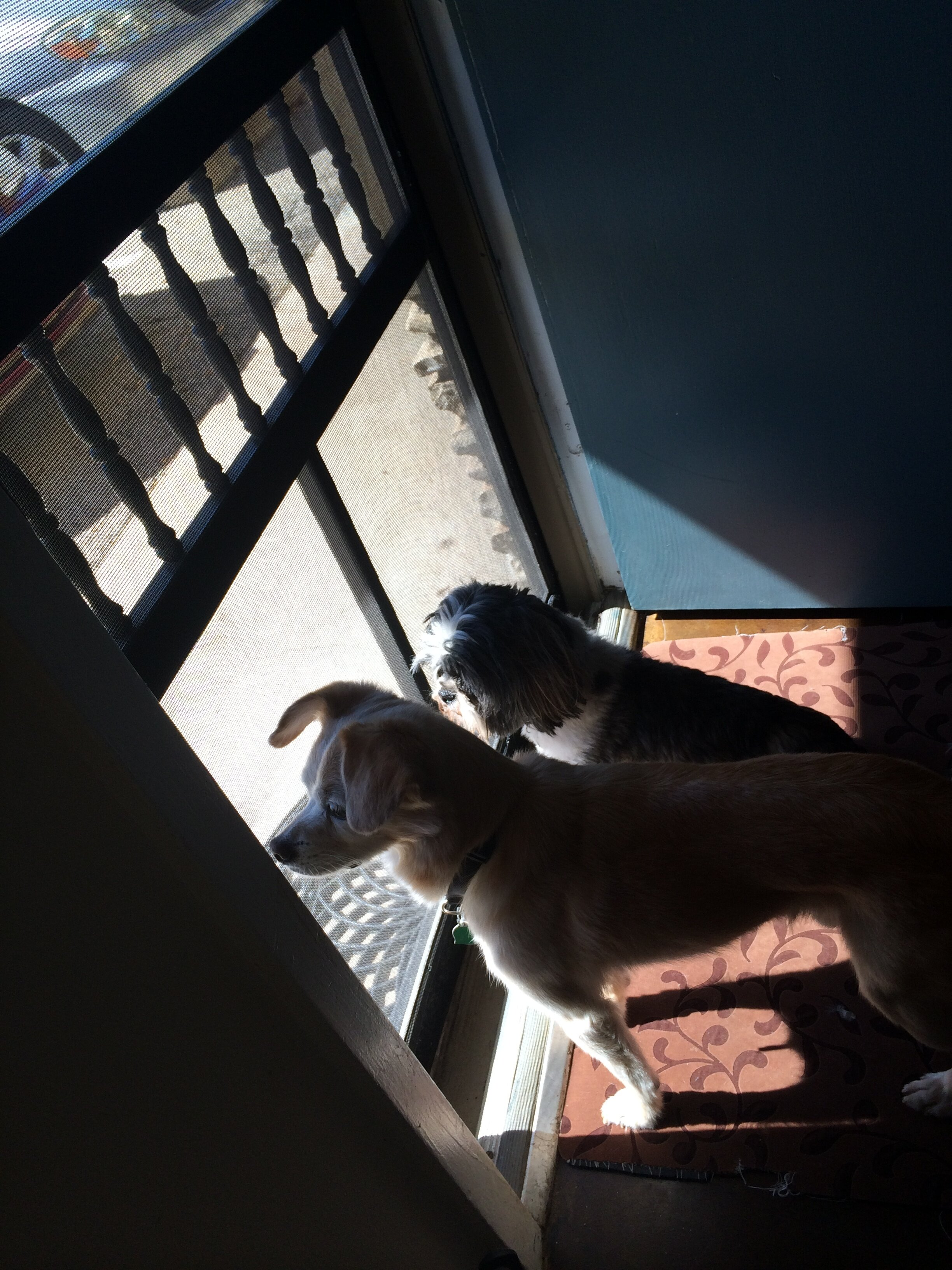 If I wanted to open the door, I would ask these sweet pups to back up so I could address my company and keep them calm