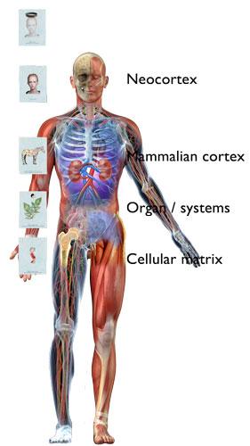 Order-and-anatomy.jpg
