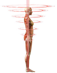 7 plexi, sympathetic or horizontal neural pathways that act as capacitors