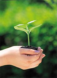 Seed germinating.jpg