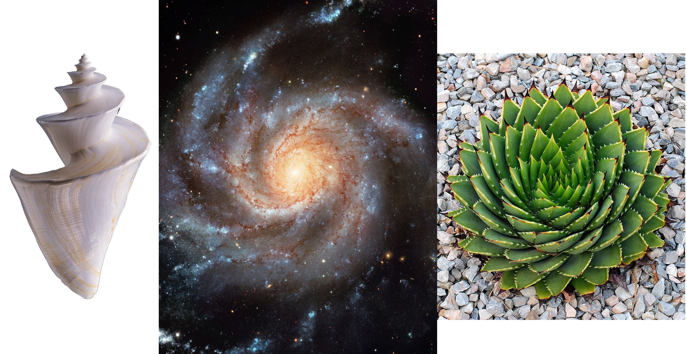 Spirals in nature, and the cosmos