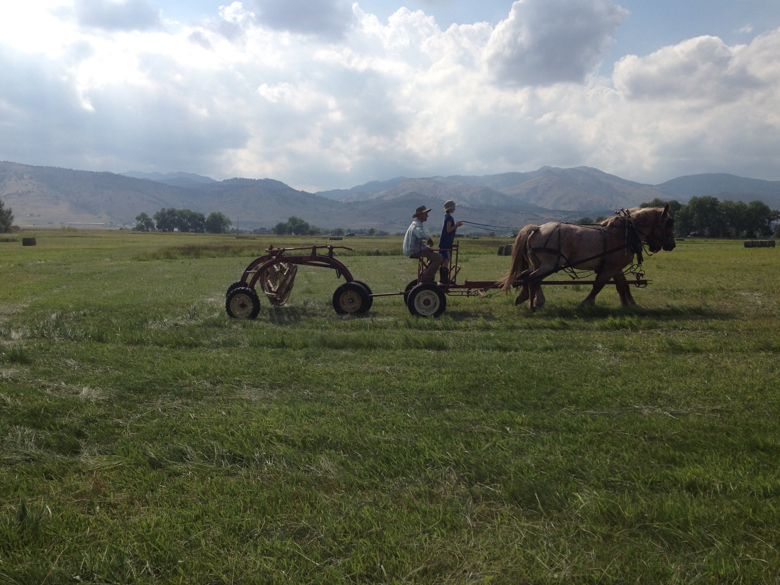 draft horse-power, making hay with horses, Boulder Colorado