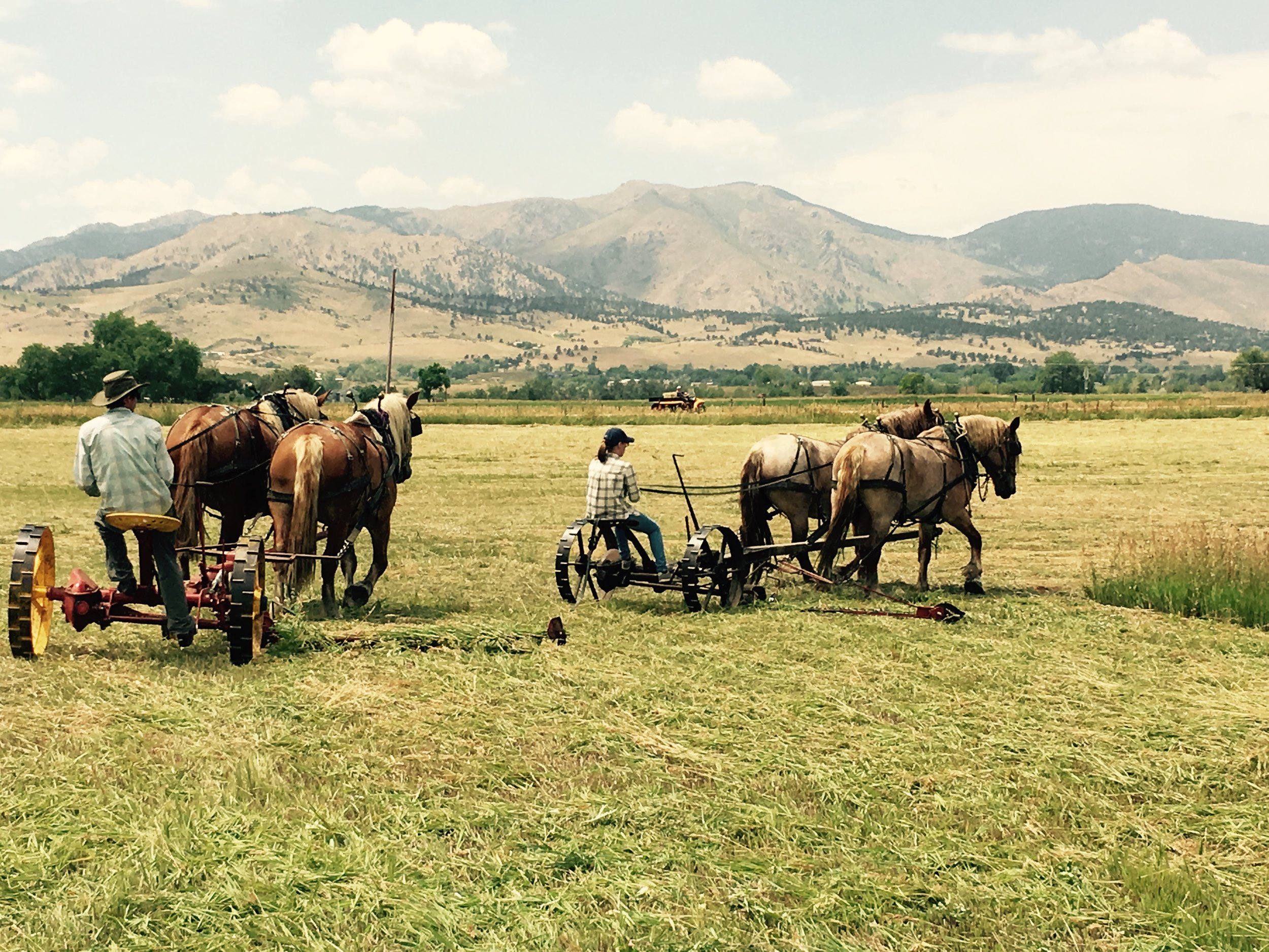 Draft Horse Farming -