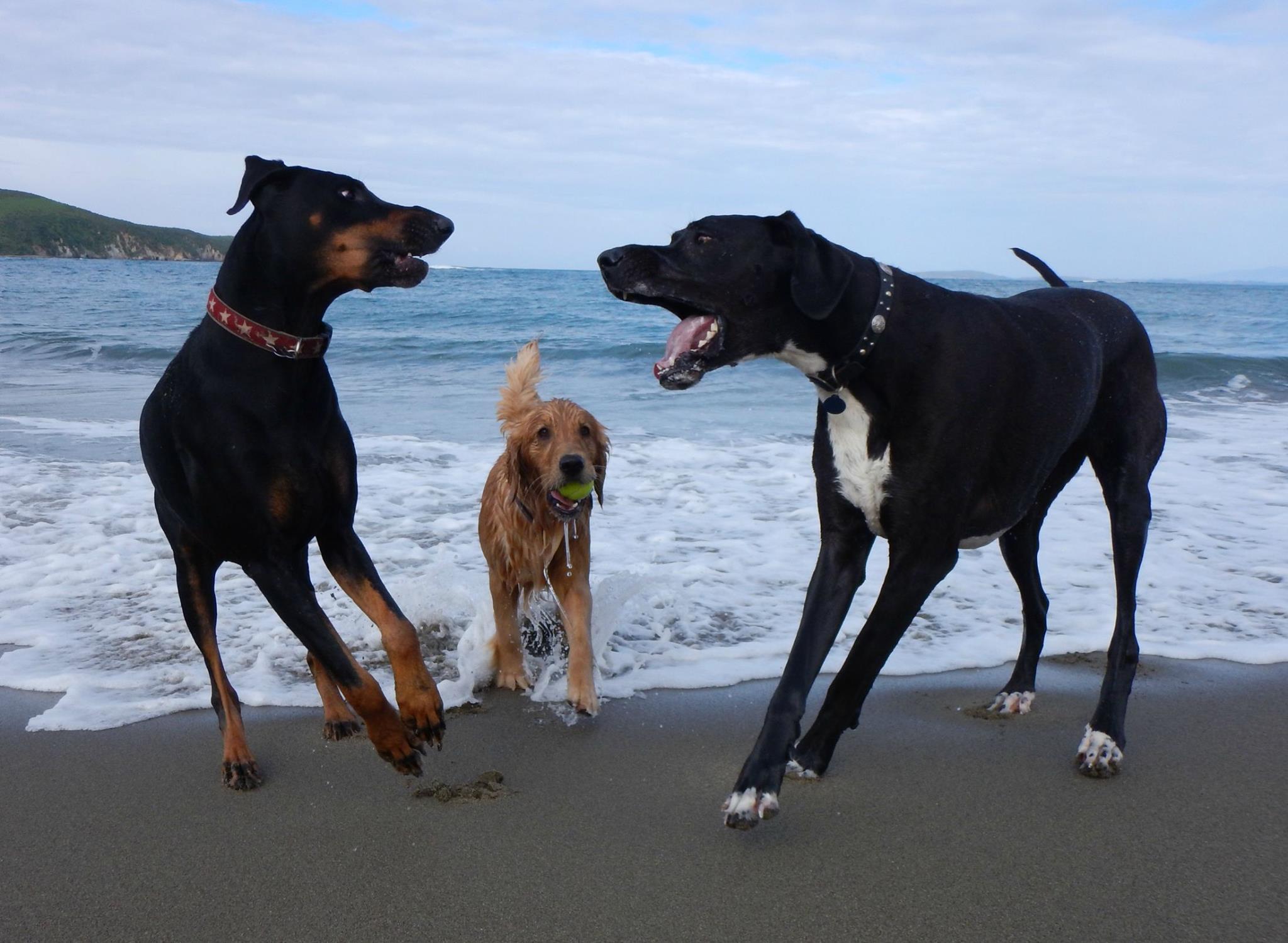 Lifespan dog spay neuter