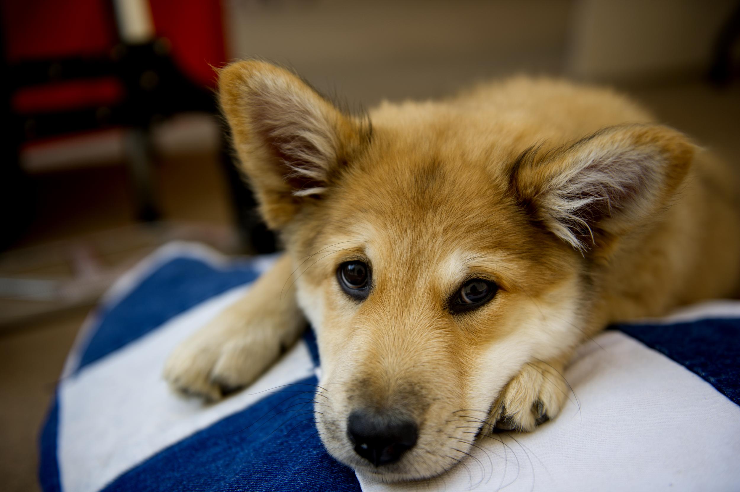 canine ovarian cancer dog