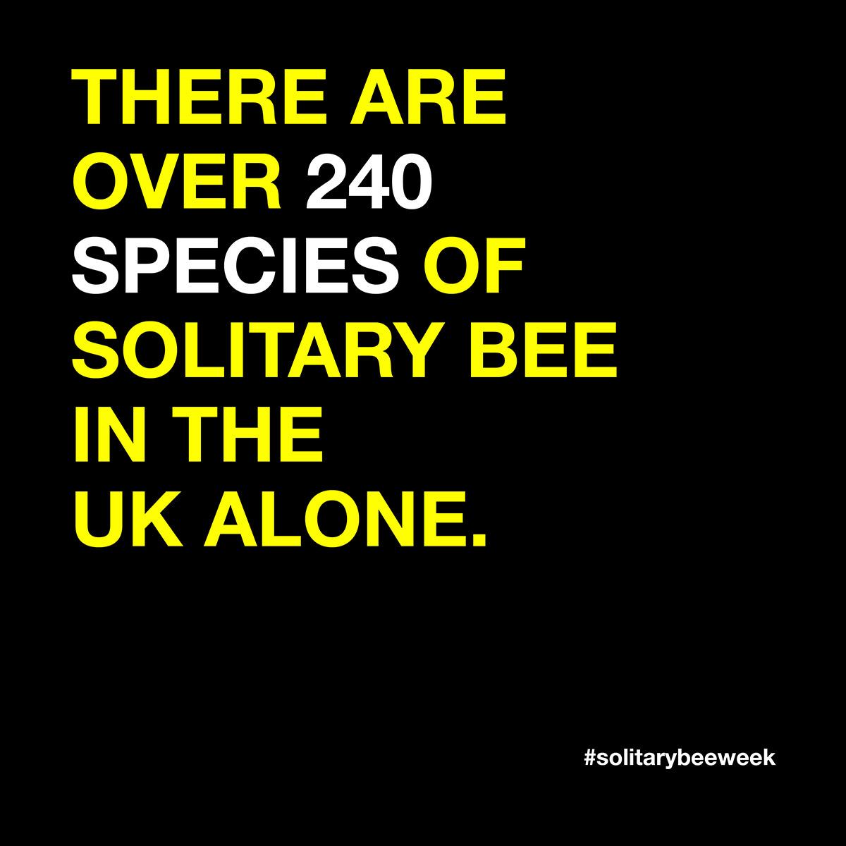 solitary-bee-species