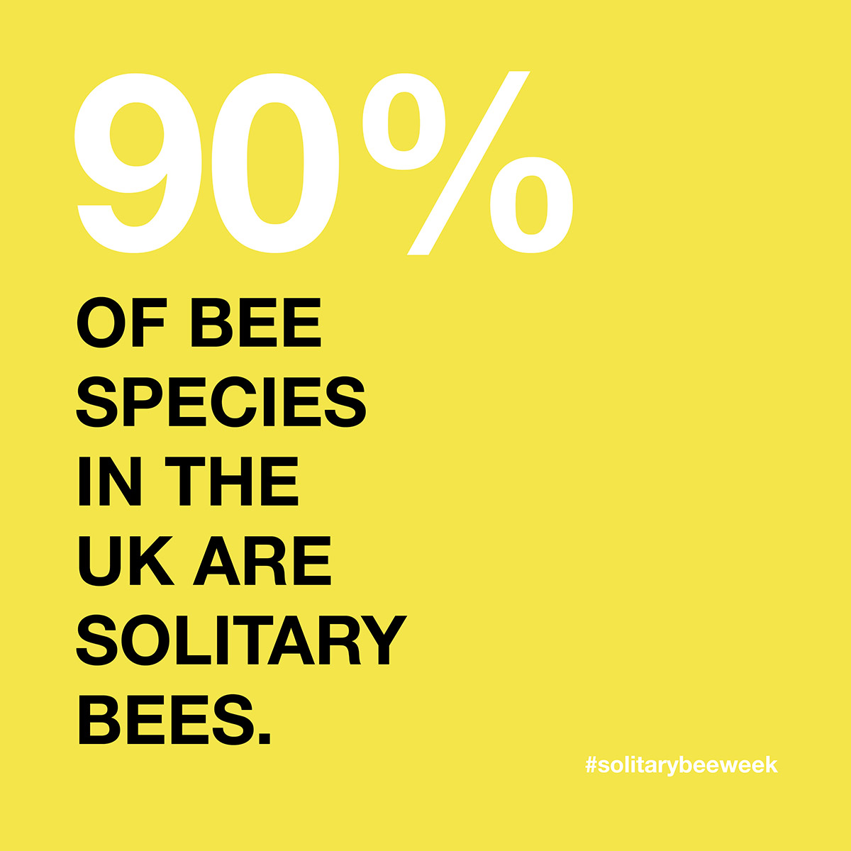 solitary-bee-90%