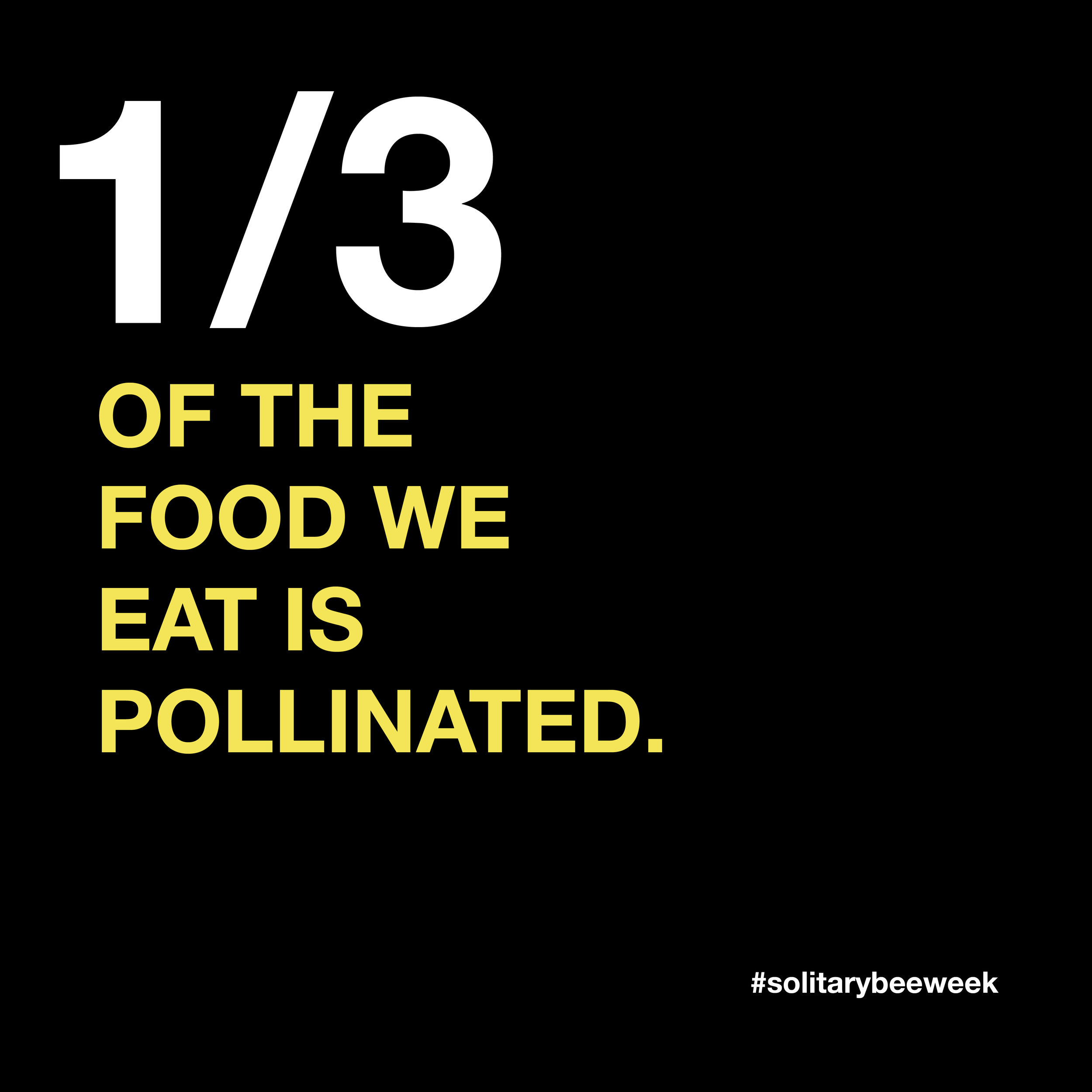 solitary-bee-fact