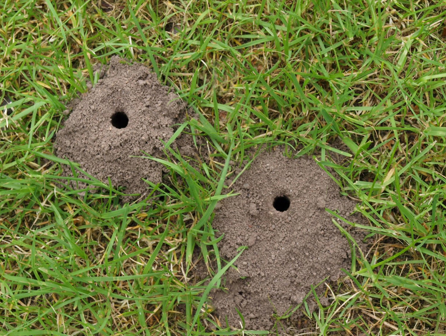Leave an exposed area of soil   Roughly 70% of solitary bees are called mining bees and nest in underground burrows up to 60cm deep. These burrows are often marked by small mounds of excavated soil. Do your bit for the bees by leaving an area of your lawn bare, or building a mound of sandy soil in a border or plant pot.