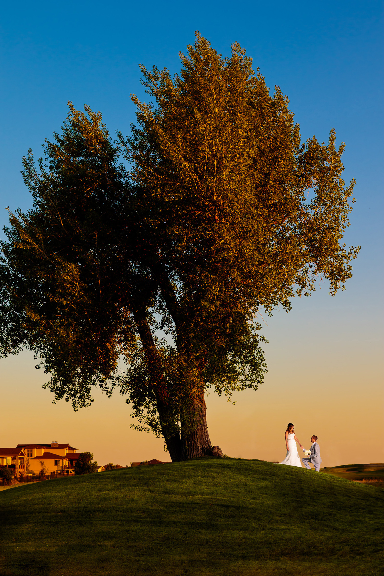 Groom reenacts marriage proposal under large tree during a big red barn highland meadows wedding near the golf course in windsor colorado