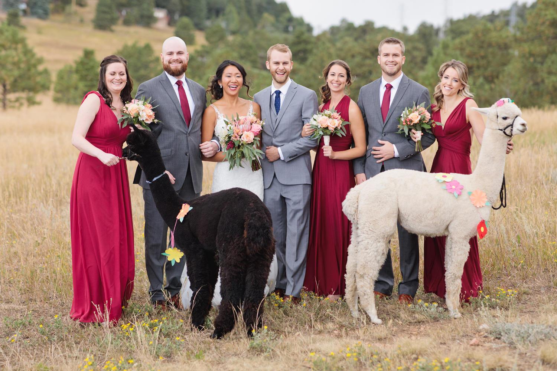 wedding party with llamas at a mount vernon canyon club wedding in colorado