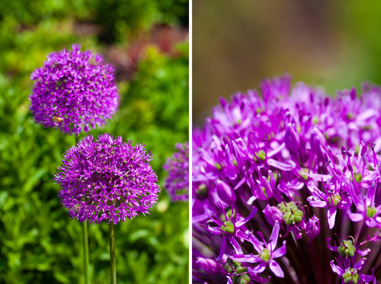 denver-botanic-gardens-wedding-tomKphoto-029.jpg