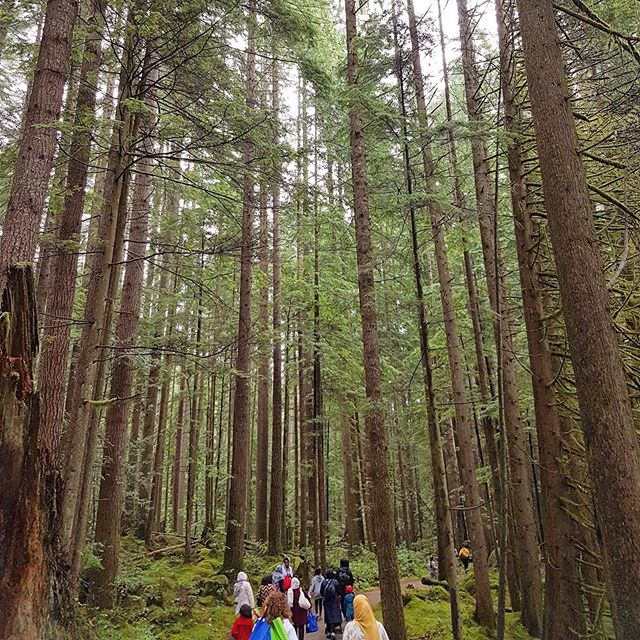 Nearly 50 incredible new Canadian moms and their children braved the rain and got #outsideandunplugged with us last weekend. Thank you to our incredible hike lead @lifeaziknowit_101, an ambassador from @womenwhoexplore, and @mosaicbc_ for making this happen!