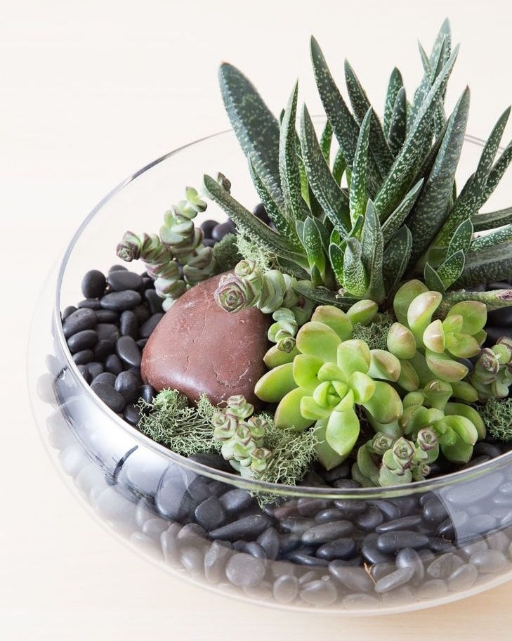 Succulents are hardy options for interior plants and can be a striking, low maintenance option. Image via Pinterest.
