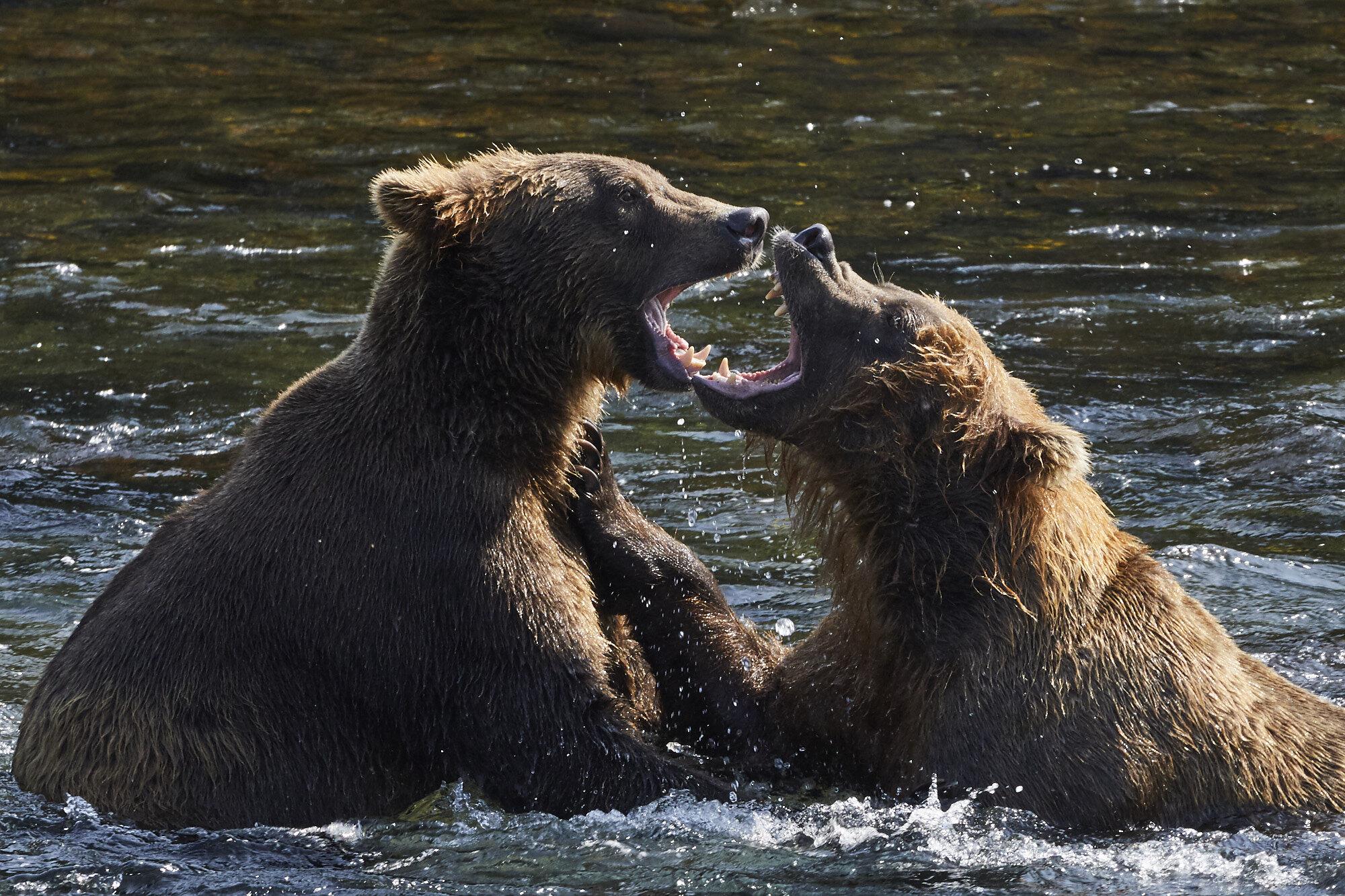 Alaska_Aug_2019_667.jpg