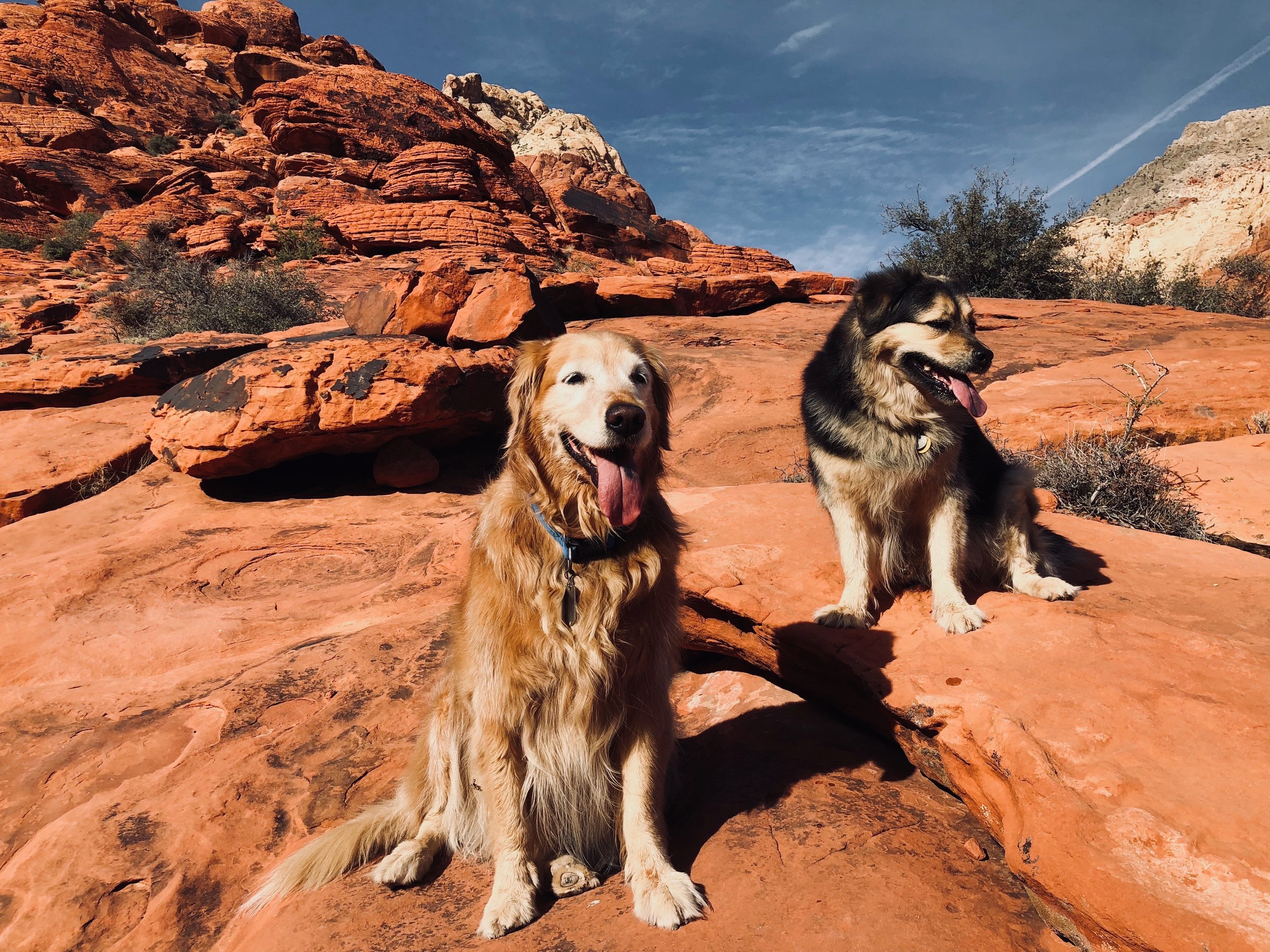 My dogs, August and April, in Red Rock Canyon - Just outside our home in Las Vegas.    They're the stars of my  upcoming short film , which will be released publicly very soon!
