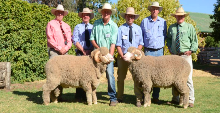 James Morris, Bonanza stud, Walgett, bought two rams including the $6500 sale-topper. Pictured are Paul Jameson, Elders, Dubbo; George Falkiner, Haddon Rig principal; buyer James Morris hold the $6500 ram, HR stud manager Andy Maclean holds the $5000 ram with Andy McLeod, classer, Dubbo, and John Settree, Landmark, Dubbo.