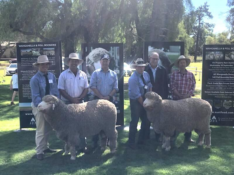 Pictured is Andy Maclean, George Falkiner, Shannon Mitchell (centre) and Stuart Murdoch (right) with Poll Rams Lot 5 and Lot 8, purchased at the 2019 Poll Boonoke Sale.