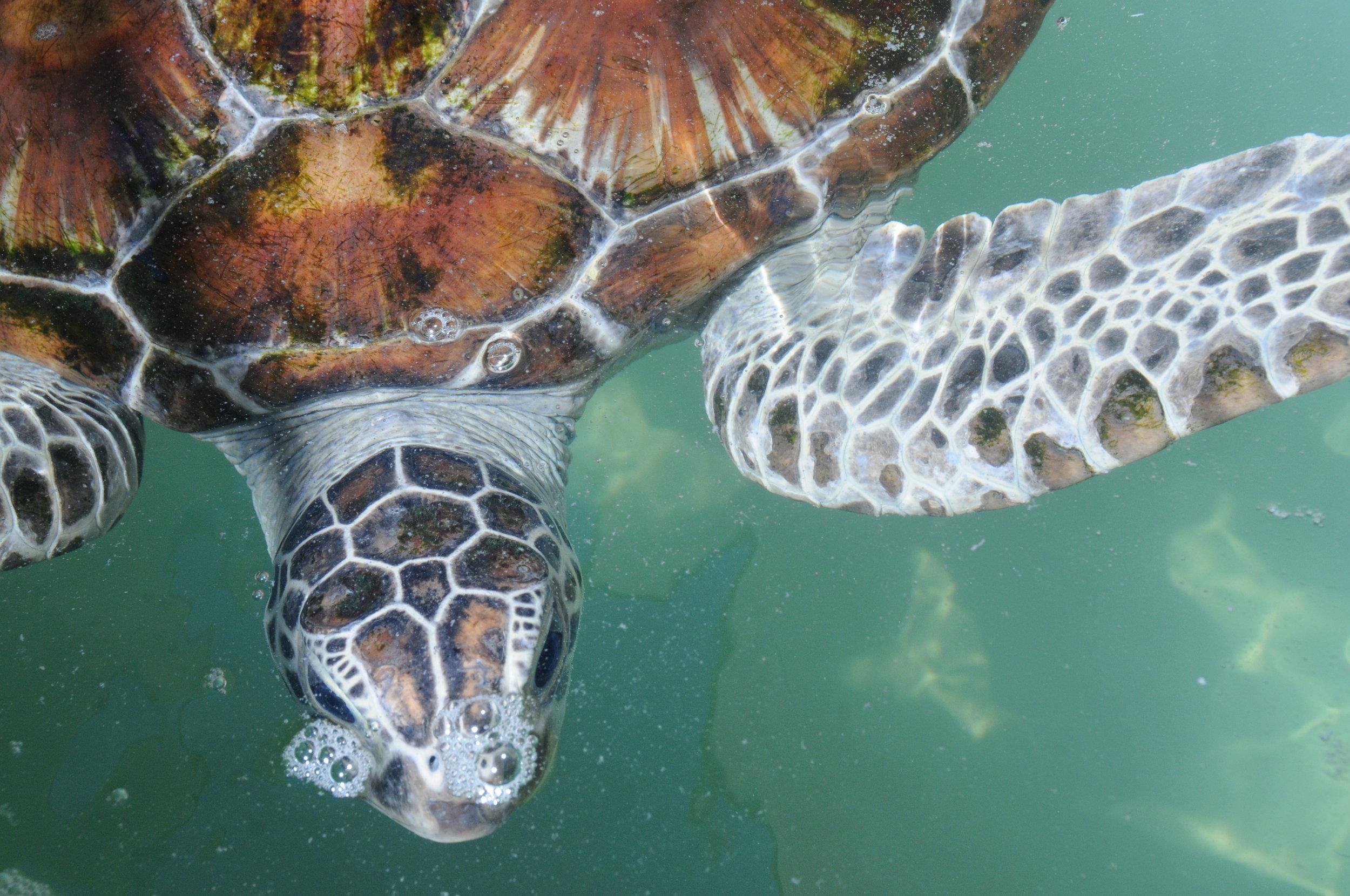 rehab turtle.jpg