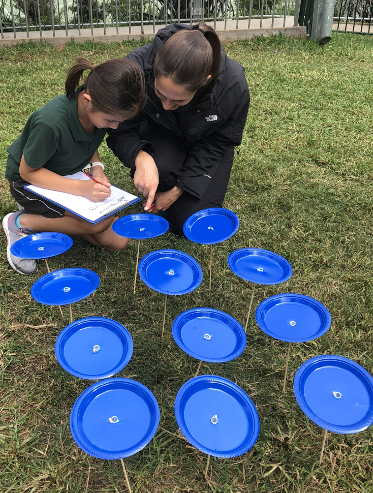 Insect study with Lane Cove Public School, Sydney - Vanessa carried out a series of insect experiments with 60 students from Lane Cove Public school as a CSIRO STEM professional in schools and the recipient of the NSW OEH and ESA outreach award.