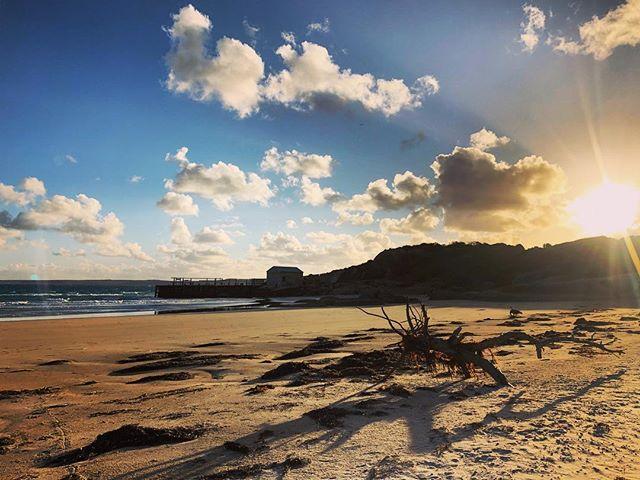 The golden hour on #threehummockisland ✨ ✨ . . . . . #tasmania #discovertasmania #tasmaniaparks #adventuretasmania #hobartandbeyond #cradlecoast #cradlecoasttasmania #visitcradlecoast #islandsofadventure #goldenhour #bassstrait #tasmaniagram #instatassie #australiagram_tas