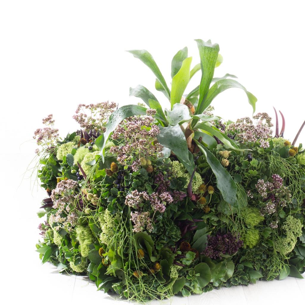Flowers : Platycerium, Oregano, Sedam, Rudbeckia, Anthurium