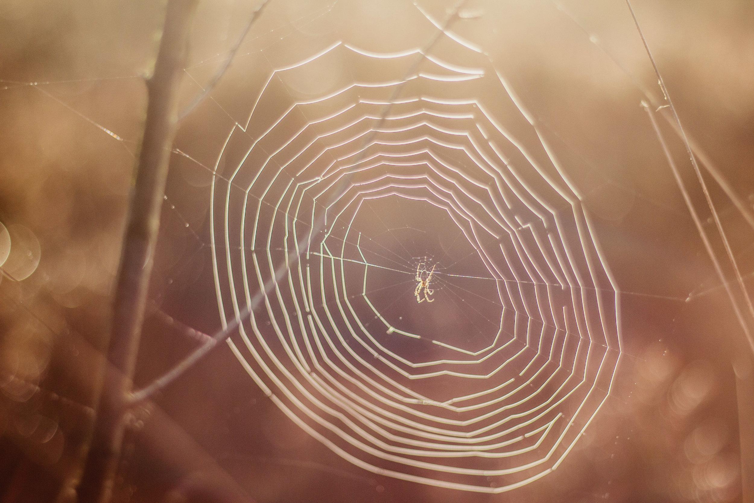 spiderweb2.jpg